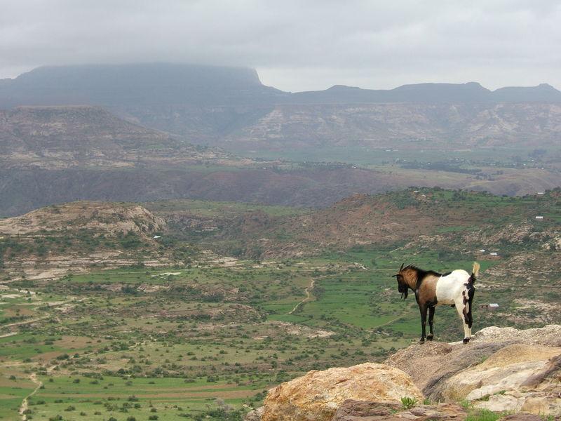 Blick über das Tal von Aksum (c) Giustino Clements