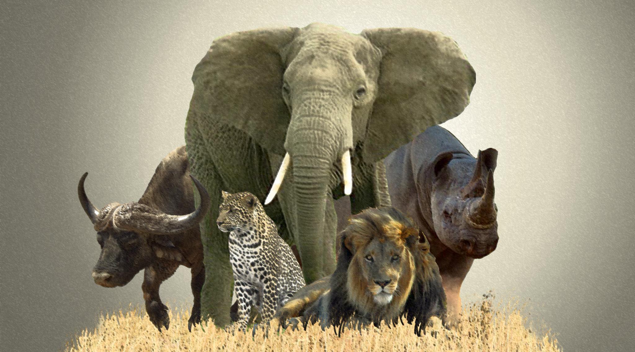 пять зверей картинки пальпации фото